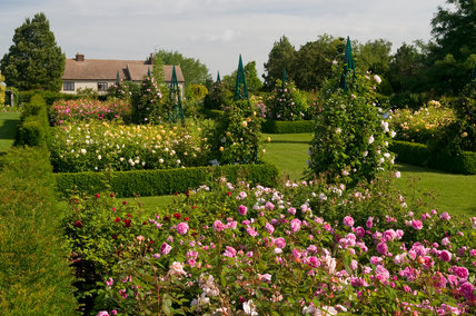 Title: The Modern Rose Garden at RHS Garden Hyde Hall Description: The Modern Rose Garden at RHS Garden Hyde Hall showing the farmhouse. Border with pink Rosa 'Gertrude Jekyll' and Rosa 'Tess of the D' Urbervilles' in foreground and yellow Rosa 'Comtes de Champagne' in the border above. Date: 23 June 2008