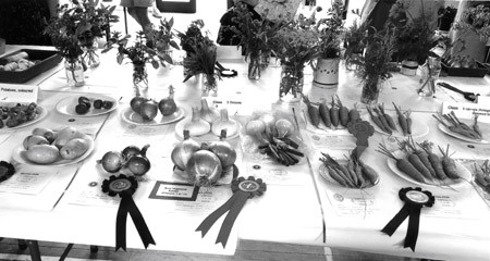 Well-earned rosettes in the vegetable sections at the Girton Show, 2009